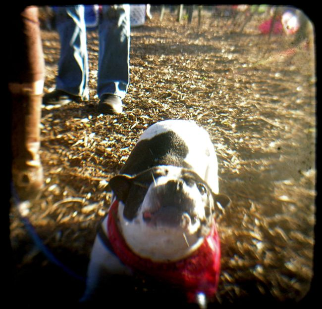 A Happy Bocce dog by Clifford Hill