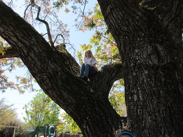 viewing-the-park-from-the-tree