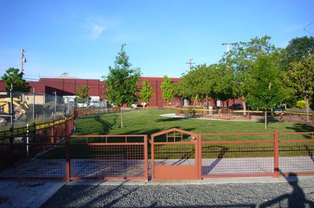 6-1-10 Dog park sod