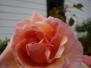 DeTurk Vintage Rose Garden