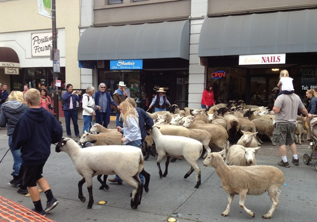 Downtown Sheep Drive