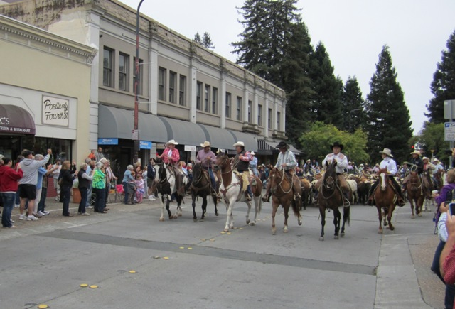 Cattle through downtown