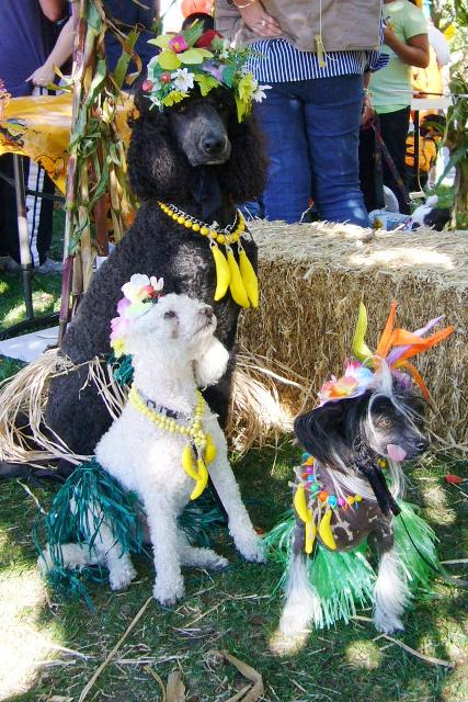 Railroad SCARE- West End Hula Dogs