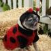 Pug-O-Ween 2009