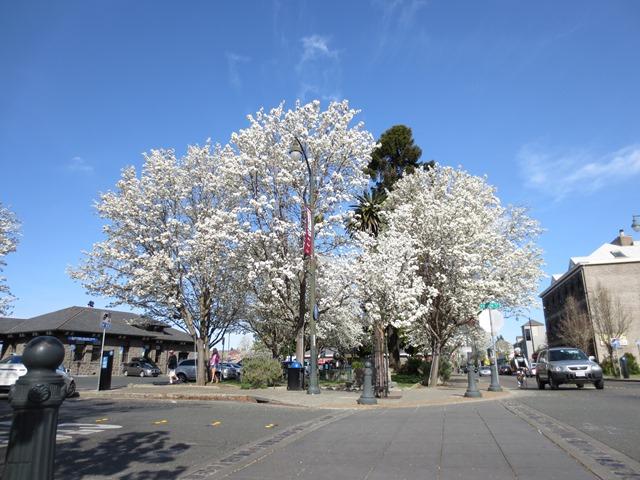 In Spring Bloom