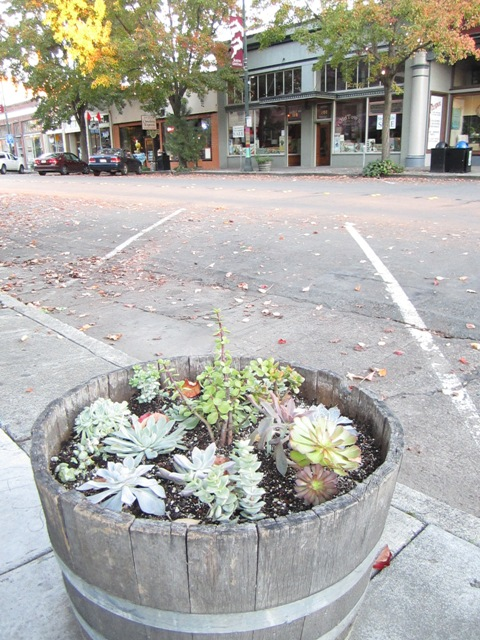 A Succulent laden wine barrel beautifies the street scape