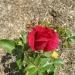 red-talisman-wb