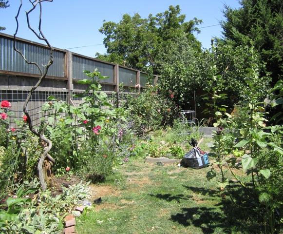 Rachel & Carissa's Organic garden