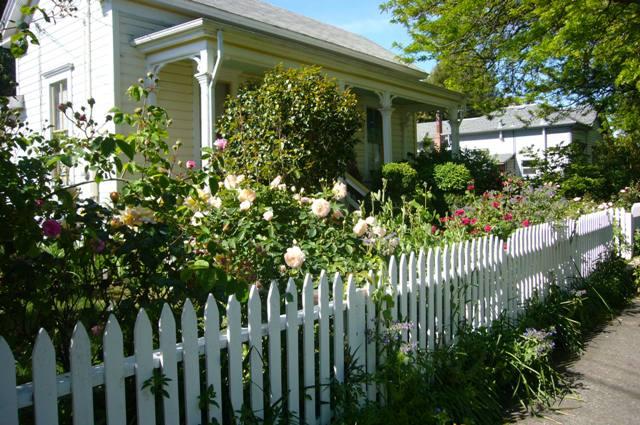 Gina\'s Amazing Garden