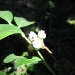 Rachel & Carissa\'s Organic garden- blueberry
