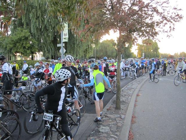 GranFondo- A sea of bikes