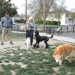Dog Park Regulars