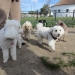 W. E. Small Dog Hour