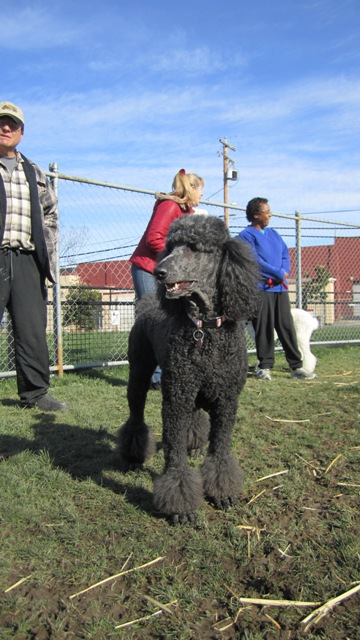 January\'s West End Poodle Party