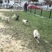 February Pug Play Day