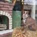 Olive, famous Railroad Square doggie