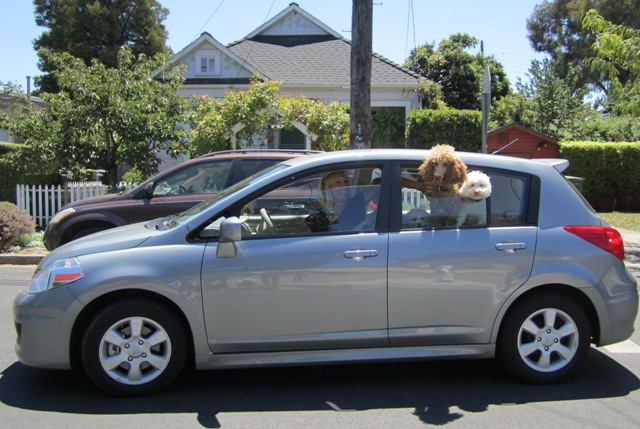 We\'re going to the Dog Park!