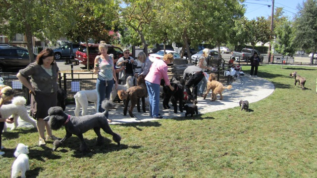 The West End Poodle Party- August