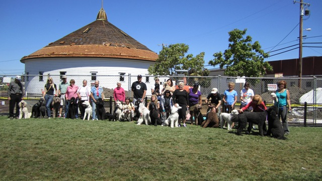 Group photo- First West End Poodle Party