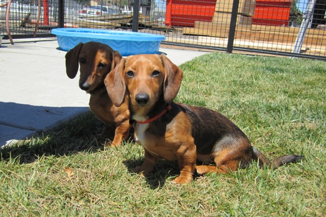 Heidi & Winnie visit from Burbank Gardens
