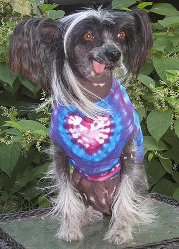 Cruella in her custom Tie Dye shirt. Thanks Sara!