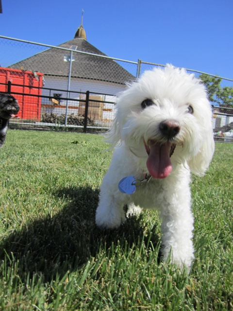 Jasmine, a happy little dog