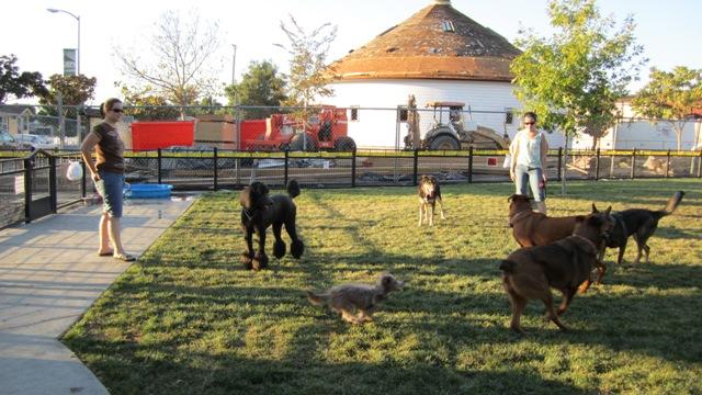 Lotsa dogs