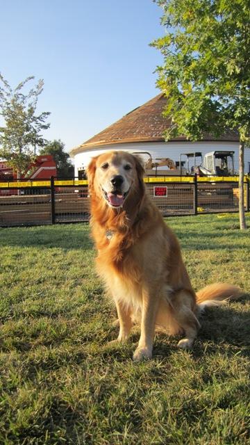 Peja at the new dog park
