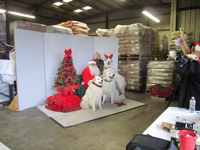 Polar Bears, err dogs, pose with Santa