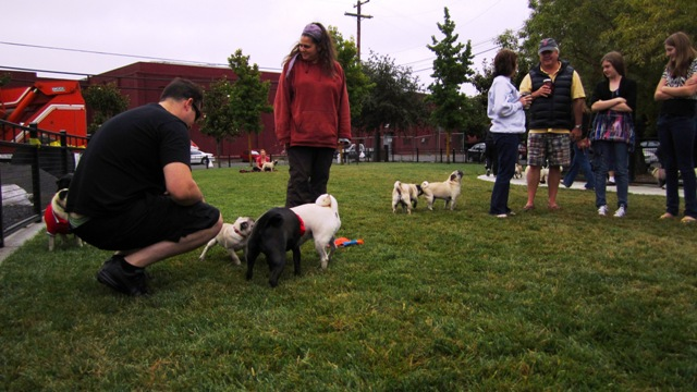 Pug owners socialize