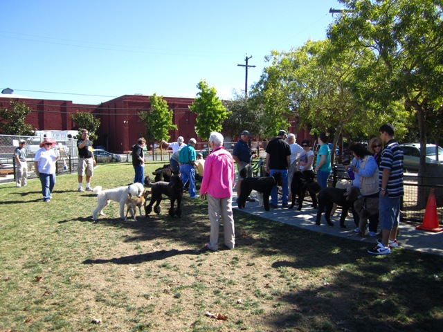 A great doggie social