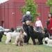 Sept W. E. Poodle Party - Uncle Bob Bertolini