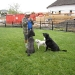 Guy Dean, dog whisperer