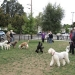 Sept W. E. Poodle Party- Another great turn out