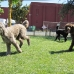 Running Poodles