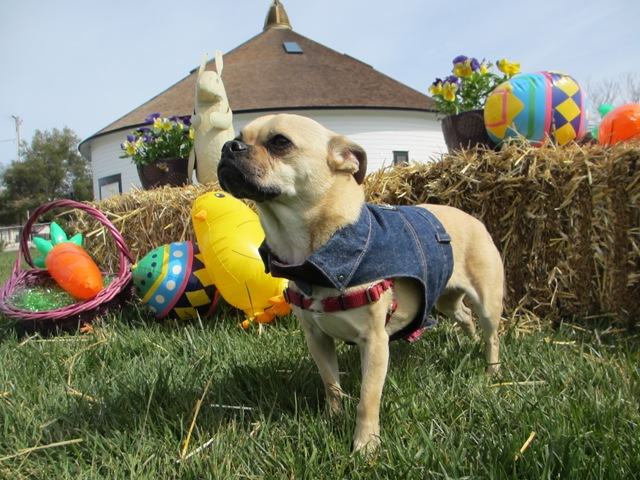 Doggie Easter Party
