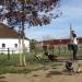 W. E. Small Dog Play Hour