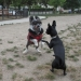 Small dog play hour