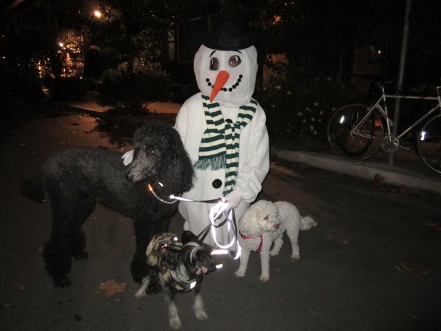 Winterfest was dog friendly!