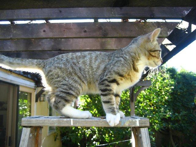 Re: Lost cat Bela