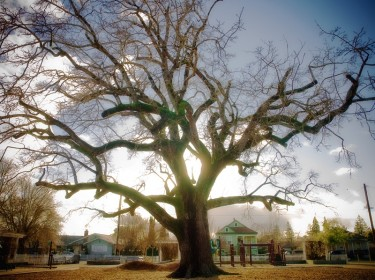 DeMeo Park Tree by Clifford Hill
