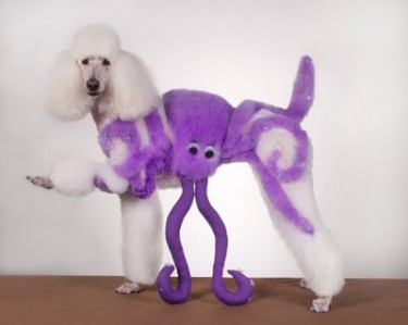 Octo-Poodle wants to party
