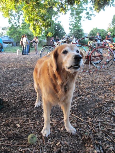 September Dog Friendly