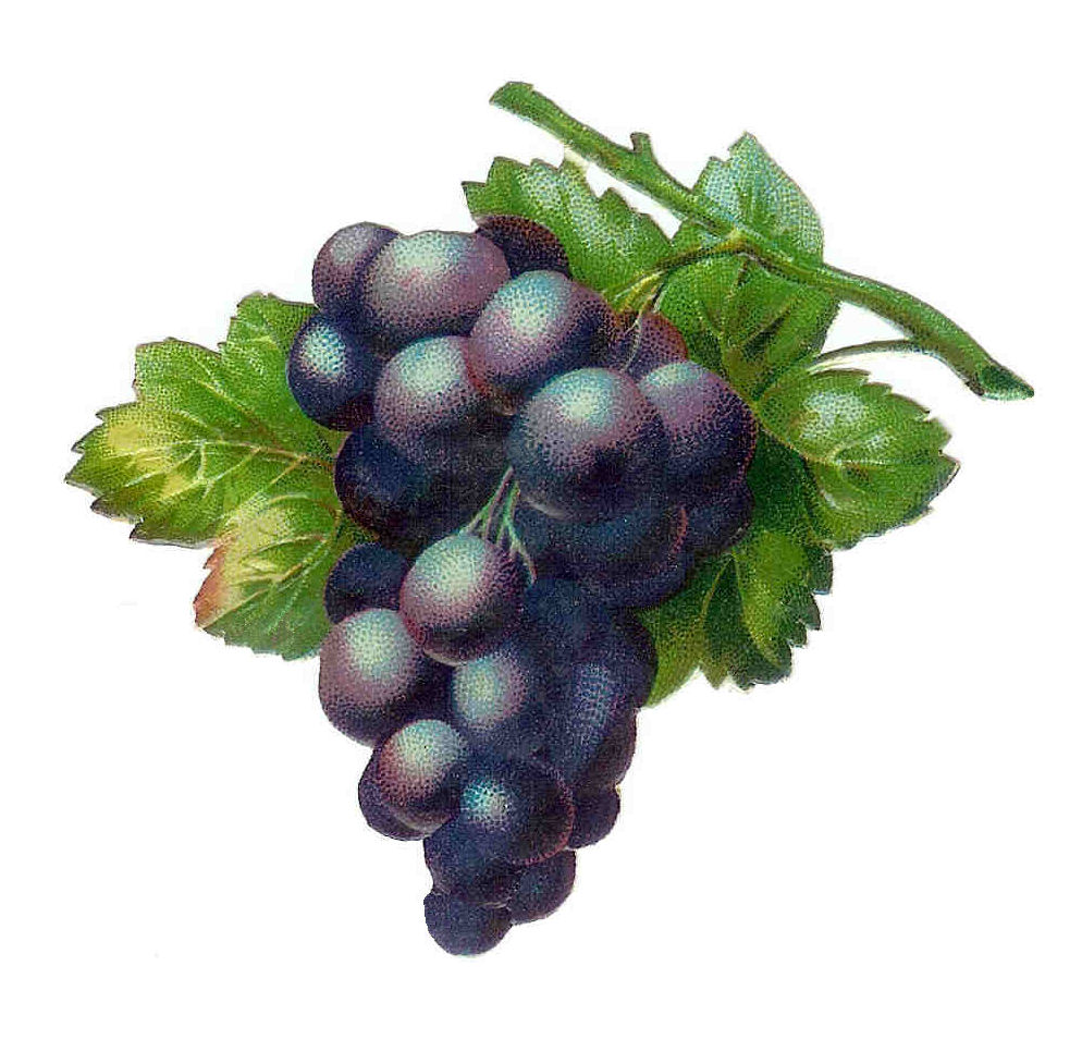 The gallery for --> Wine Grapes Art