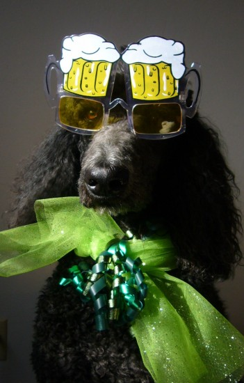 Time for the Poodles to Party!