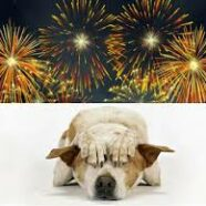 Fireworks, Explosions and Dogs