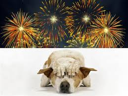 Take special care of your dog during the 4th of July holiday.
