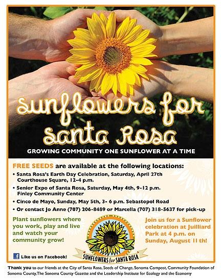Sunflowers for Santa Rosa