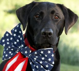 fourth-of-july-dog-255px